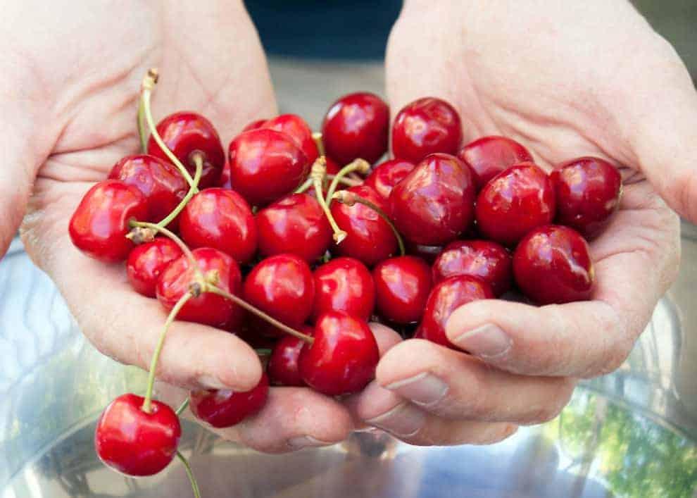 risotto alle ciliegie