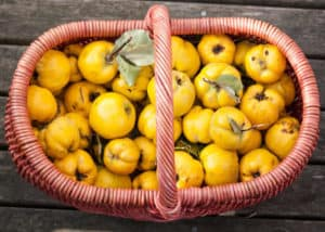 Gemüse - Mostarda Mantovana