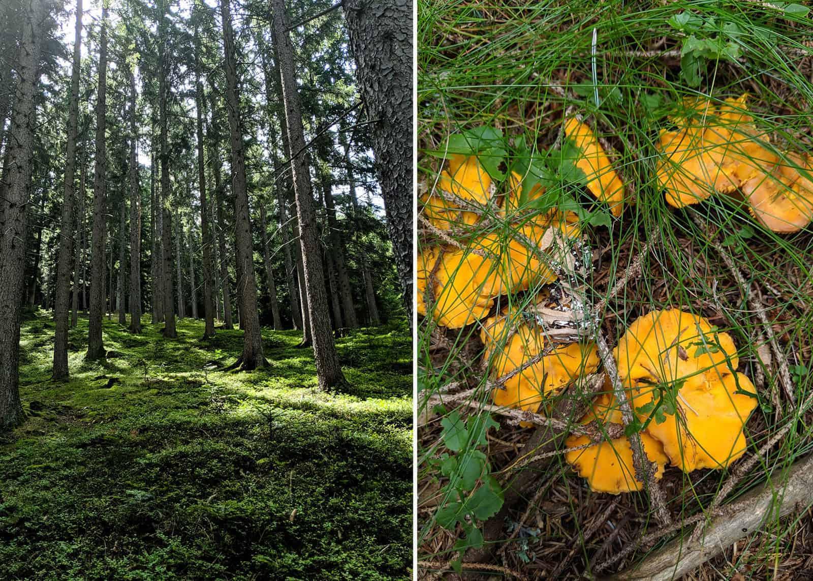 Polenta e funghi